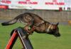Campionatul Național al Câinilor de Salvare se desfășoară la Craiova